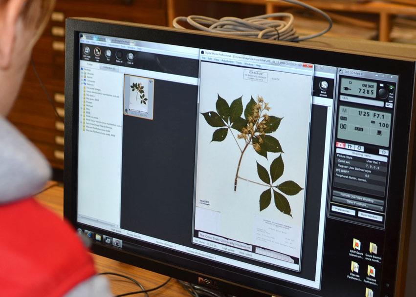 Digitization of plant specimens in the Herbarium