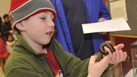 Gently holding a millipede during the Museum Open House