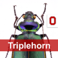 Beetle with the word Triplehorn over it