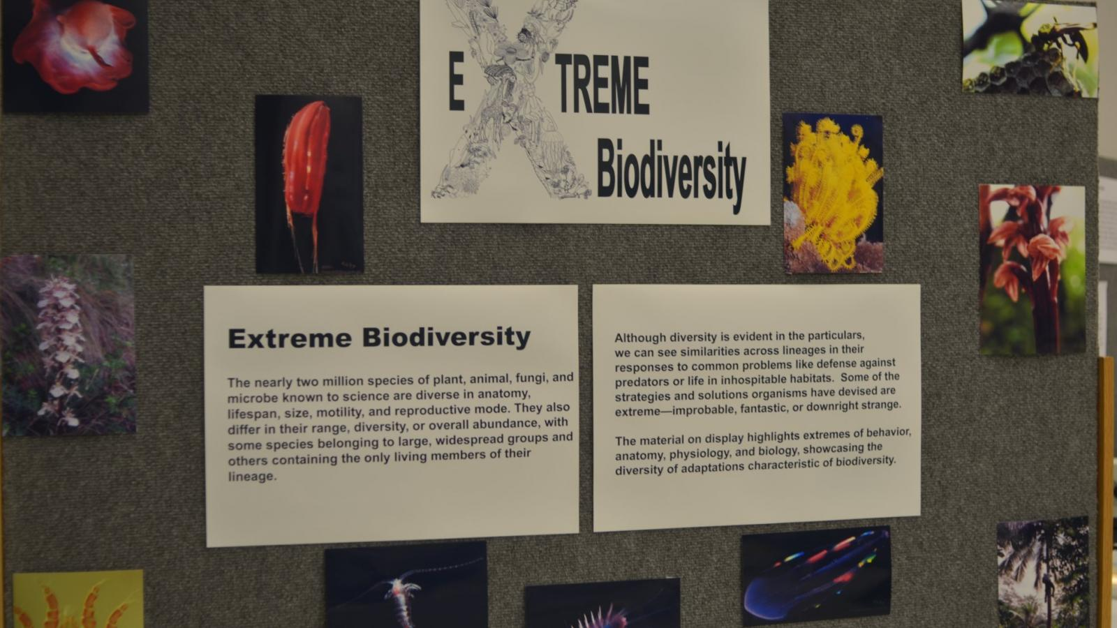 Extreme biodiversity auditorium display