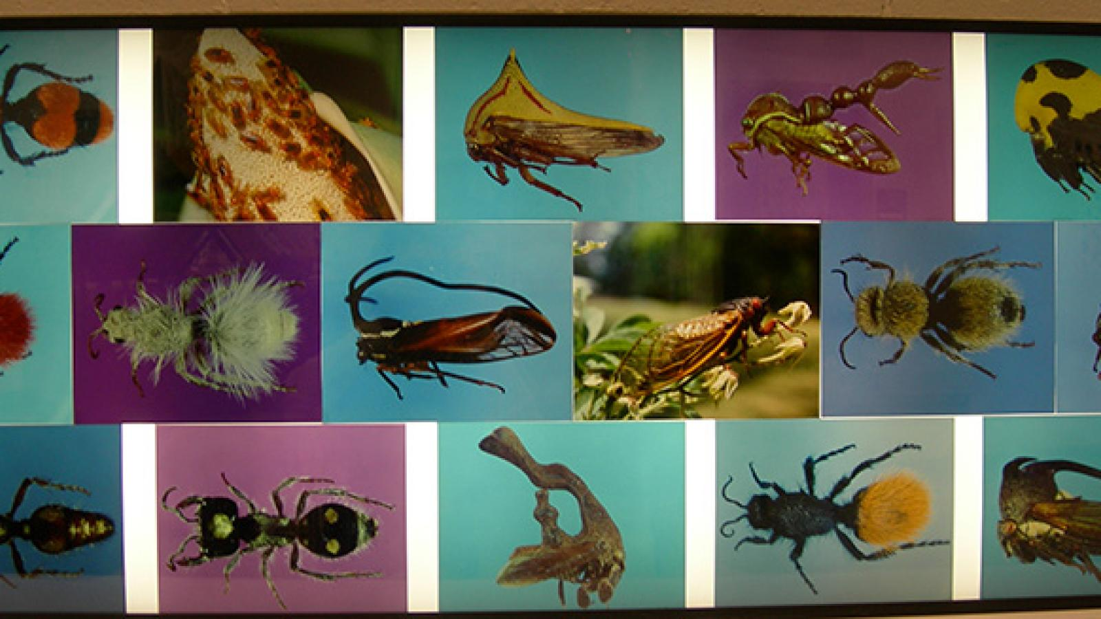 Insect photo display at 2007 Open House