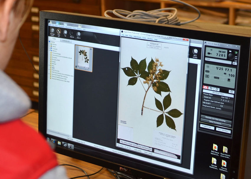Digitization of plant specimens in the Herbarium