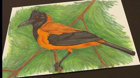 Bird drawing by Stephanie Wright